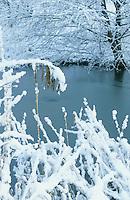 Teich, Tümpel im Winter bei Eis und Schnee, Schilf und Rohrkolben bringen eine wichtige Durchlüftung