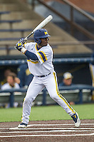 Michigan Wolverines second baseman Ako Thomas (4) at bat against the Bowling Green Falcons on April 6, 2016 at Ray Fisher Stadium in Ann Arbor, Michigan. Michigan defeated Bowling Green 5-0. (Andrew Woolley/Four Seam Images)