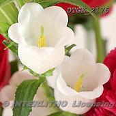 Gisela, FLOWERS, BLUMEN, FLORES, photos+++++,DTGK2176,#f#