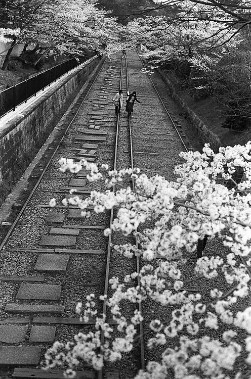 People take a walk on an old railway under the cherry blossoms in Kyoto.<br /> <br /> Les gens se promènent sur un ancien chemin de fer sous les cerisiers en fleurs à Kyoto.