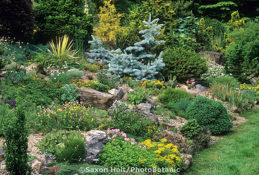Connecticut rock garden with dwarf conifers, hardy succulents and annuals