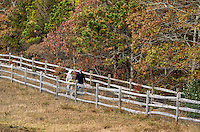Senior couple walking on a country path, Martha's Vineyard, Massachusetts, USA