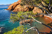 Beautiful red rocks, turquoise sea, and maritime pines seascape in the Trayas, <br /> Calanque du Maubois, near Cannes French Riviera (Côte d'Azur) France