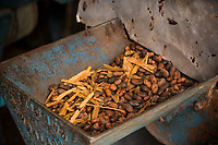 Oaxaca, Mexico.   Day of the Dead Celebrations.  Cinnamon, Almonds, and Sugar (not shown) are added to Cacao Beans before grinding to make Chocolate Mole Sauce, an important ingredient in recipes for Day of the Dead Celebrations.