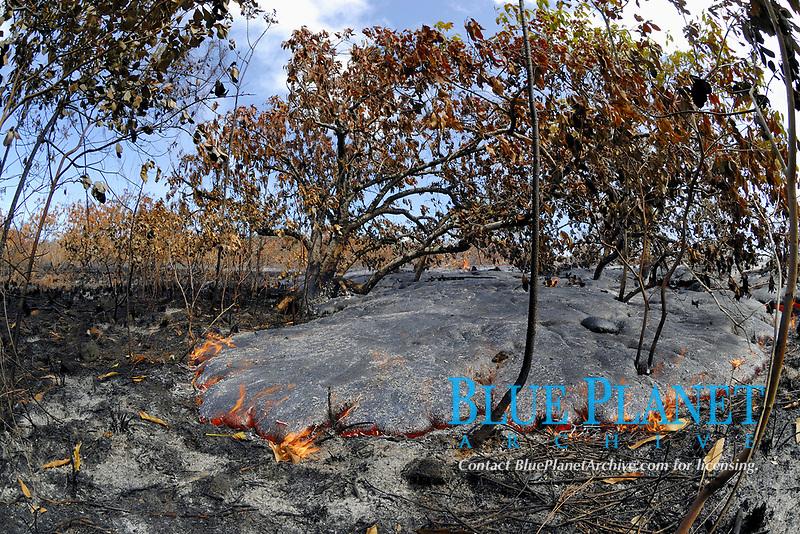 Lava by Gary Sleik's house, Lava flow in the trees, Near Hawaii, USA Volcanoes National Park, Kalapana, Hawaii, USA, The Big Island of Hawaii, USA