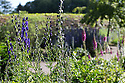 07/07/15<br /> <br /> Deadly Monkshood/Aconitum surrounded by other blooming poisonous plants.<br /> <br /> The Poison Garden, Alnwick Garden.<br /> <br /> All Rights Reserved: F Stop Press Ltd. +44(0)1335 418629   www.fstoppress.com.