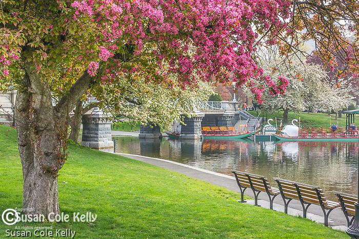 the Public Garden, Boston, Massachusetts, USA