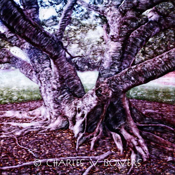 The tree trunk and roots wind and wonder. The invasion has started.<br /> <br /> -Limited Edition of 50 Prints