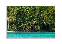 Maho Bay Palms<br /> Virgin islands national park<br /> St. John<br /> US Virgin Islands