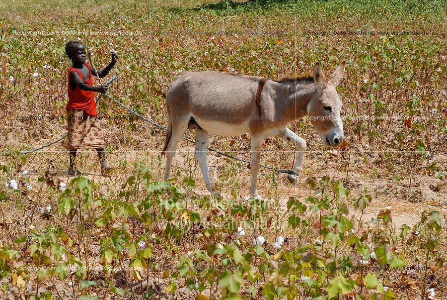 BURKINA FASO , children work with their families on the smale scale farm, girl with donkey in cotton field / Kinder arbeiten mit auf der Farm der Eltern, Maedchen mit Esel im Baumwollfeld