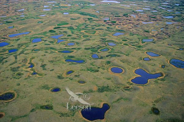 Prairie Pothole ponds near Lostwood National Wildlife Refuge, North Dakota.  Spring.
