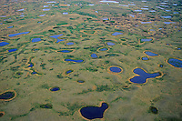 Prairie Pothole ponds near Lostwood National Wildlife Refuge, North Dakota.  Spring.