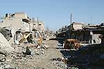 26/2/2015--Kobane,Syria-- The local market of Kobane which had seen so many fights and was crumbled during the heavy fighting between coalition forces,YPG's fighters and and ISIS.