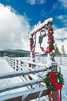 Cow decorated with Christmas ornaments on ranch near Lakeview, Oregon