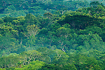 Tropical rainforest canopy, Kibale National Park, western Uganda