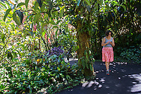 A woman using her cell phone walks through Hawaii Tropical Botanical Gardens in Papa'ikou, just north of Hilo, Big Island of Hawaiʻi.
