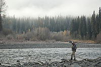 A fly angler fishing for Steelhead (Oncorynchus mykiss) in northern British Columbia.
