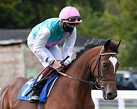 Storm Dreamer ridden by Rob Hornby goes down to the start of  The Draintech Tankers Nursery Stakes during Horse Racing at Salisbury Racecourse on 11th September 2020