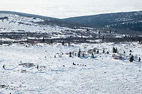 Paul Gebhardt runs on top of the Blueberry Hills on his way to Shaktoolik during Iditarod 2009