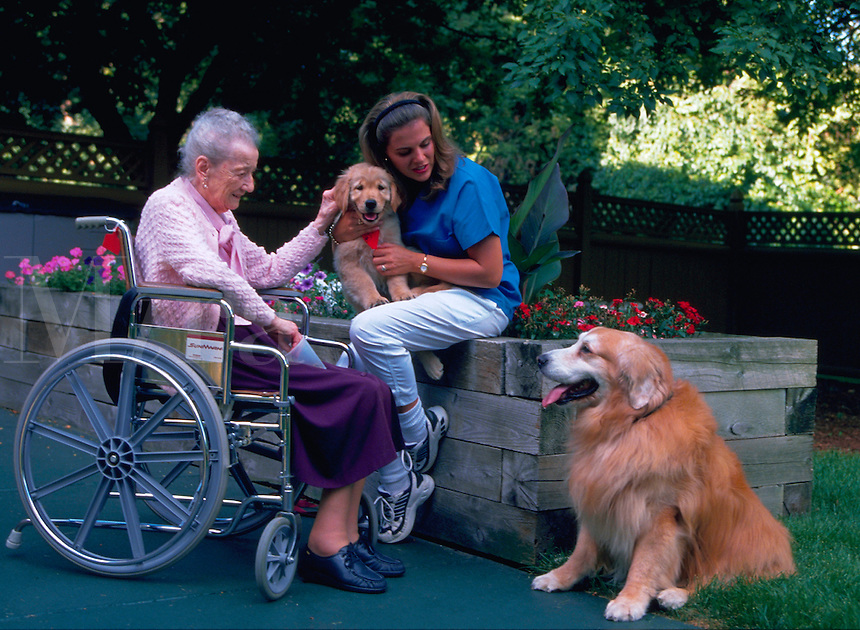 Female health care professional interacting with elderly woman in a wheelchair and two golden retrievers, one a puppy and one an adult.