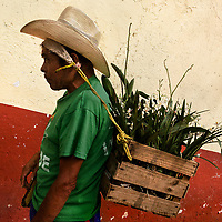 "An indigenous Tzotzil Maya man carries a box of herbs and flowers, using ""mecapal"" (a tumpline), in the street of San Cristóbal de las Casas, Chiapas, Mexico, 21 November 2018."