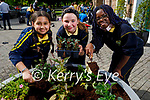 Tralee Presentation NS students planting new flowers at the Ashe Memorial on Friday as part of a project by Kerry County Council and Tralee Tidy Towns. L to r: Morgan Hannah O'Sullivan, Caoimhe O'Hanlon and Ashley Preko