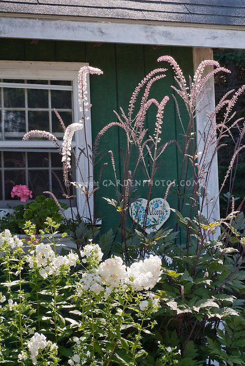 Actaea James Compton aka Cimicifuga with pink tinged white flowers, Phlox paniculata, next to house with windowbox of Pelargonium annual geranium pink blooms and Heart shaped Welcome sign