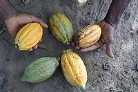 IVORYCOAST: cocoa