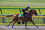 TOKYO,JAPAN-JUNE 02: Contentment,trained by John Size, is execising for the Yasuda Kinen at Tokyo Racecourse on June 02,2016 in Fuchu,Tokyo,Japan (Photo by Kaz Ishida/Eclipse Sportswire/Getty Images)