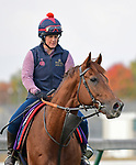October 31, 2018 : Lightning Spear, trained by David Simcock; trains for the Breeders' Cup Mile at Churchill Downs on October 31, 2018 in Louisville, KY. Jessica Morgan/ESW/CSM