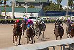 January 23, 2021:  #1 Performer with jockey Joel Rosario  on board, wins the Fred W Hooper GIII Stakes  at Gulfstream Park in Hallandale Beach, Florida.  Liz Lamont/Eclipse Sportswire/CSM