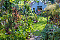 Afternoon sunlight strreaming into backyard cottage garden with narrow lawn path; California plant collector garden - Carol Brant