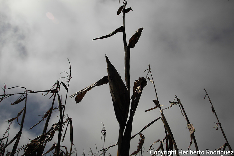 A corn mipa appears with the sky backwards in the Acaxochitlan village, in northern state of Hidalgo, during the festivities of the Day of the Deads. Hundreds of Native villages pay homage to their deads on the eve of November 2 as a tradition since the preHispanic times. Photo by Heriberto Rodriguez