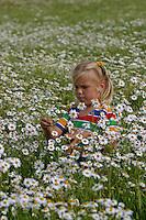 Mädchen, Kind pflückt Blumenstrauß in Kamillenfeld, Geruchslose Kamille, Tripleurospermum perforatum, Tripleurospermum inodorum, Matricaria inodora, Scentless False Chamomile