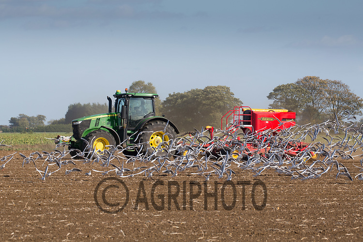 Drilling Winter Wheat in the South Lincolnshire Fens<br /> Picture Tim Scrivener 07850 303986<br /> ….covering agriculture in the UK….