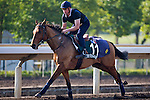 SHA TIN,HONG KONG-DECEMBER 09: One Foot In Heaven,trained by , Alain de Royer Dupre,exercises in preparation for the Hong Kong Vase at Sha Tin Racecourse on December 9,2016 in Sha Tin,New Territories,Hong Kong (Photo by Kaz Ishida/Eclipse Sportswire/Getty Images)