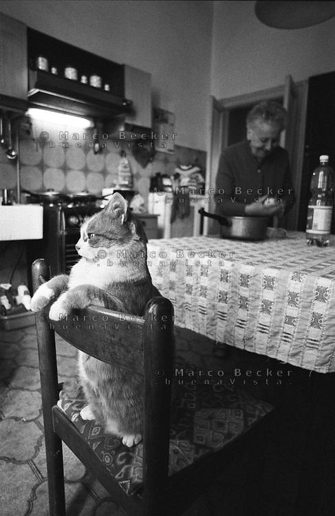 Milano, gatto affacciato alla finestra su una sedia in cucina --- Milan, cat on a chair in the kitchen looking out the window