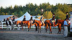 Lineup in horse show at Cheshire Fair in Swanzey, New Hampshire USA
