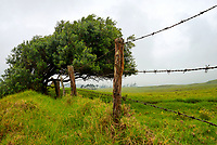 A green field with a barbed wire fence defines a farm's property line along Mud Lane near Mana Road in Waimea, Big Island.