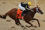 HOT SPRINGS, AR - MARCH 12: Luna De Loco with jockey Ricardo Santana Jr. crossing the finish line in the Homan Touch Classic at Oaklawn Park on March 12, 2016 in Hot Springs, Arkansas. (Photo by Justin Manning)