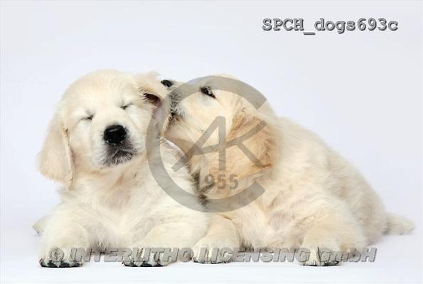 Xavier, ANIMALS, dogs, photos(SPCHdogs693c,#A#) Hunde, perros