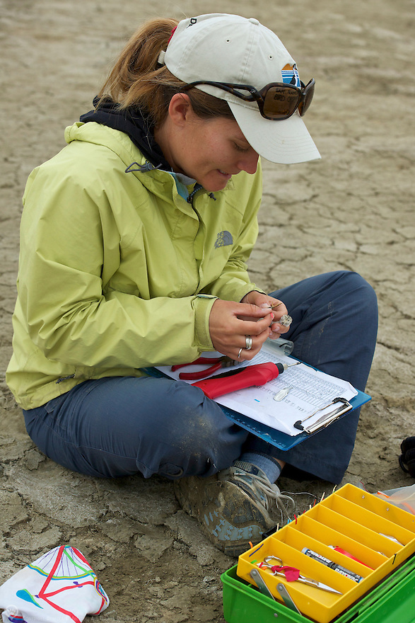Researcher Caitlin Robinson-Nilsen bands the next generation of snow plovers for the Snowy Plover Recovery Project.<br />  <br /> Learn more about the Snowy Plover Recovery Project:<br /> http://www.sfbbo.org