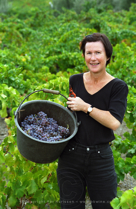 A visiting vineyard worker showing a bucket full of Grenache Noir grapes in a vineyard in Collioure, Languedoc-Roussillon, France