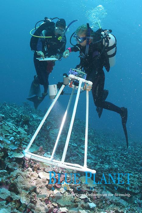 Researchers Karla Mcdermid and assistant using digital camera to record algae species, Lisianski, Papahanaumokuakea Marine National Monument, Northwestern Hawaiian Islands, Hawaii, USA, Pacific Ocean