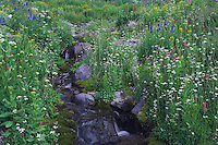 Mountain stream and wildflowers Yankee Boy Basin,Tall Larkspur, Arrowleaf Ragwort, Loveroot, Paintbrush, Ouray, San Juan Mountains, Rocky Mountains, Colorado, USA, July 2007