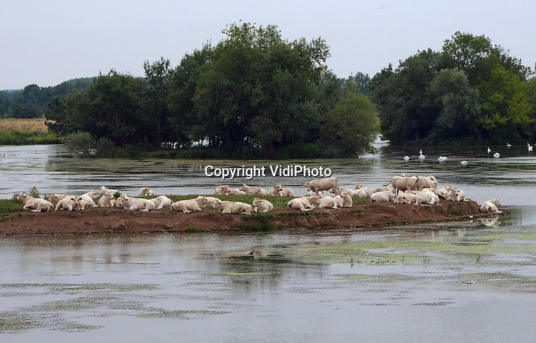 Foto: VidiPhoto<br /> <br /> BRIENNE – Een kudde Charolaise vleeskoeien geniet dinsdag van de rust op een landtong in de Saóne-et-Loire in de Bourgogne, in de buurt van het Franse dorp Brienne (Bourgogne). Franse rundveehouders lijken nog niet echt te profiteren van de opheffing van het importembargo door de VS van Frans rundvlees. Daar kwam begin dit jaar -na een embargo van 19 jaar- een eind aan. Oorzaak is de toegenomen productie, waardoor de vleesprijzen blijven dalen. De vleesconsumptie neemt wereldwijd toe, maar niet in Europa. Die blijft naar verwachting tot zeker 2020 stabiel met 67,6 kilo (10,2 kg rundvlees) per persoon per jaar. In Frankrijk leven bijna 19 miljoen koeien (25 soorten), waarvan 3,5 miljoen vleesrunderen, veelal op kleinschalige bedrijven.