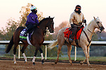Raging Bull, trained by trainer Chad C. Brown, exercises in preparation for the Breeders' Cup Mile at Keeneland Racetrack in Lexington, Kentucky on October 31, 2020.