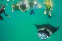 snorkelers and reef manta ray, Mobula alfredi, Hanifaru Bay, Hanifaru Lagoon, Baa Atoll, Maldives, Indian Ocean