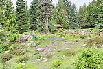 Hidden Lodge sits above Alpine Wildflowers.  Ohme Gardens, Wenatchee, Chelan County, Washington, USA.