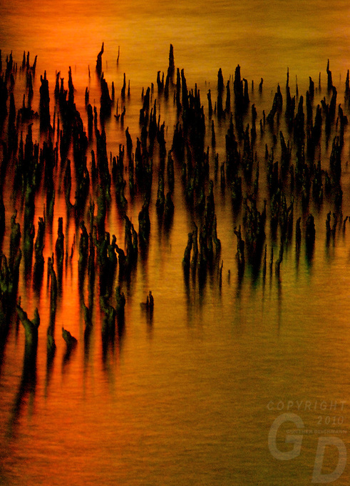 """MANGROVES AND LIGHT,CHUUK, """"PAINTED MANGROVES"""" MANGROVES AT NIGHT IN CHUUK, PACIFIC, MICRONESIA"""